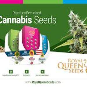 Seeds Feminized